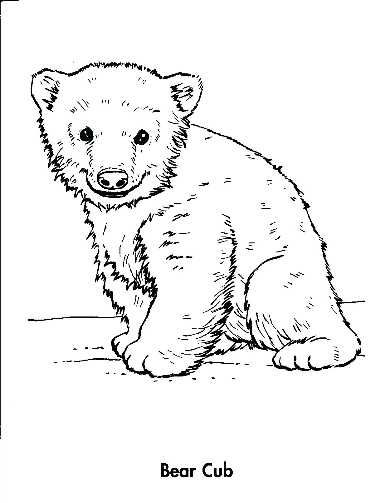 1250x1610 Coloring Baby Polar Bear Coloring Pages How To Draw A Grizzly