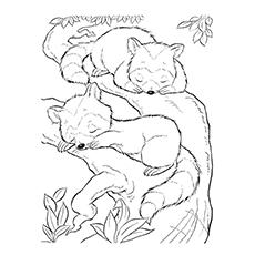 Baby Raccoon Drawing