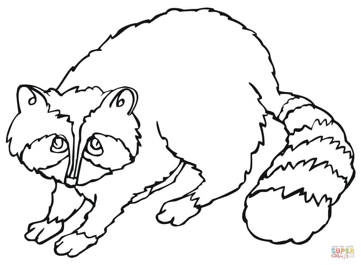 Baby Raccoon Drawing at GetDrawings.com | Free for personal use Baby ...