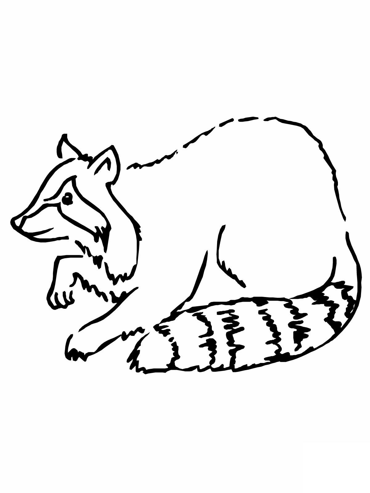 Hermosa La Página De Chester The Raccoon Para Colorear Viñeta ...