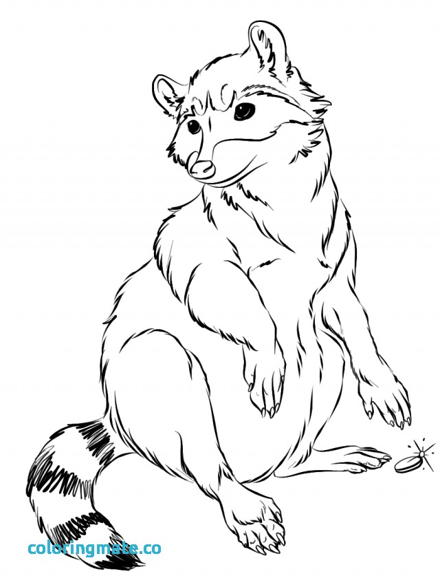 640x853 Raccoon Coloring Page Lovely Common Raccoon Clipart Clipground