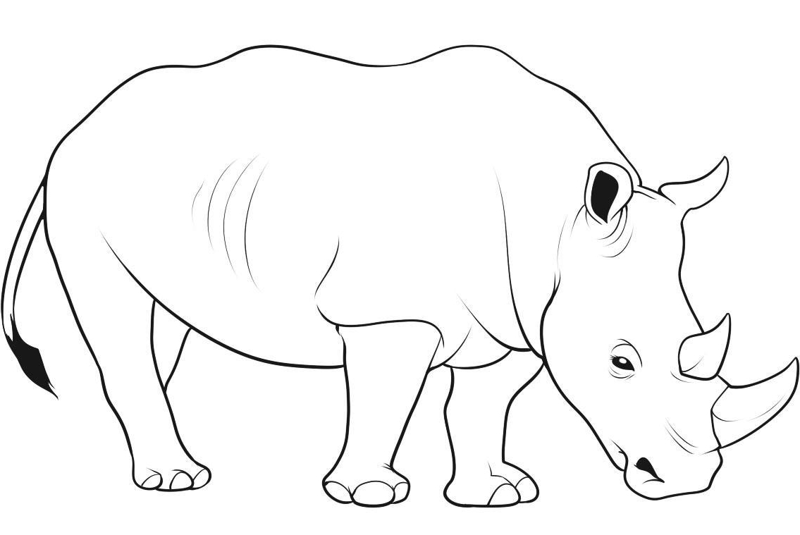 baby rhino drawing at getdrawingscom free for personal