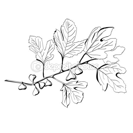 450x450 Stylized Black And White Drawing Of A Branch Of Fig Tree Baby