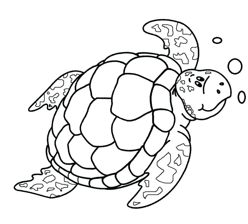 850x770 Drawing Sea Turtle Coloring Page Cute Turtle Printable Coloring