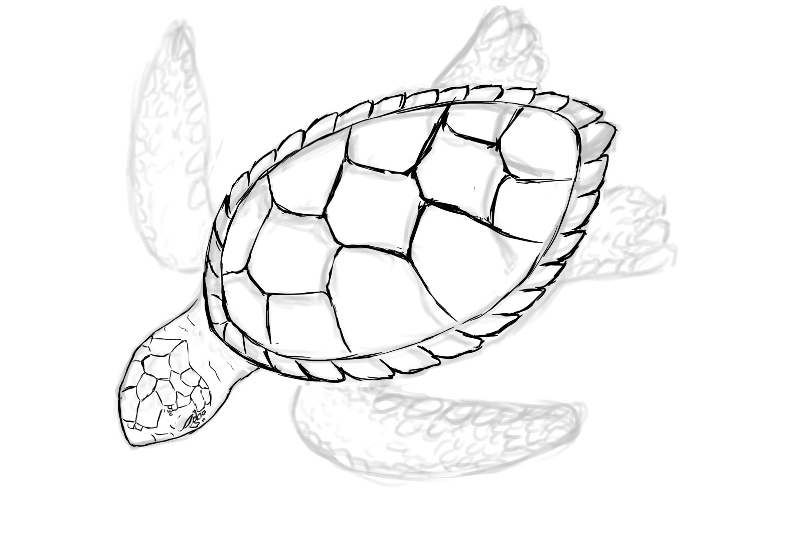 1599x1110 Images For Gt Baby Turtle Sketch Sea Turtles Turtle