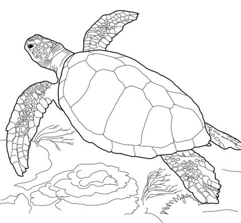 480x444 Loggerhead Sea Turtle Coloring Page Free Printable Coloring Pages