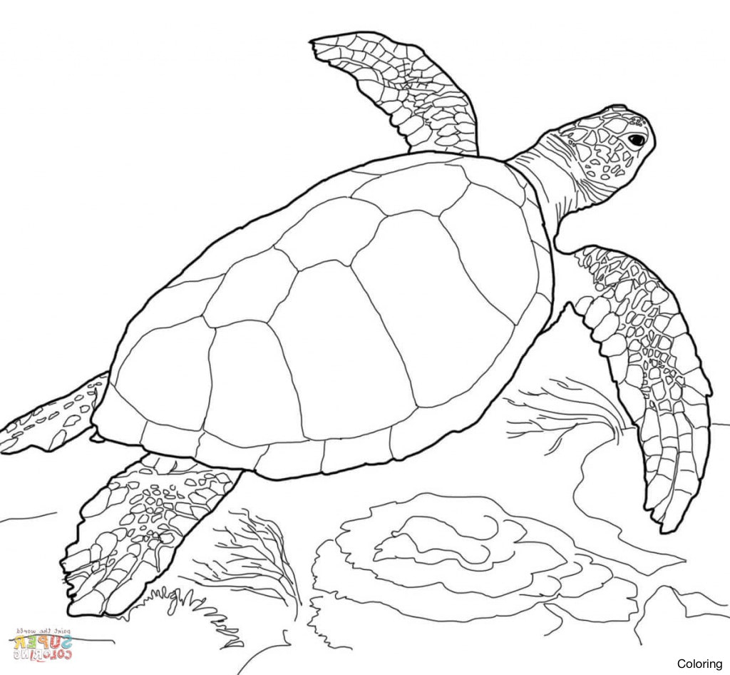 1024x946 Printable Turtle Coloring Pages For Kids Of Sea Turtles Adult Page
