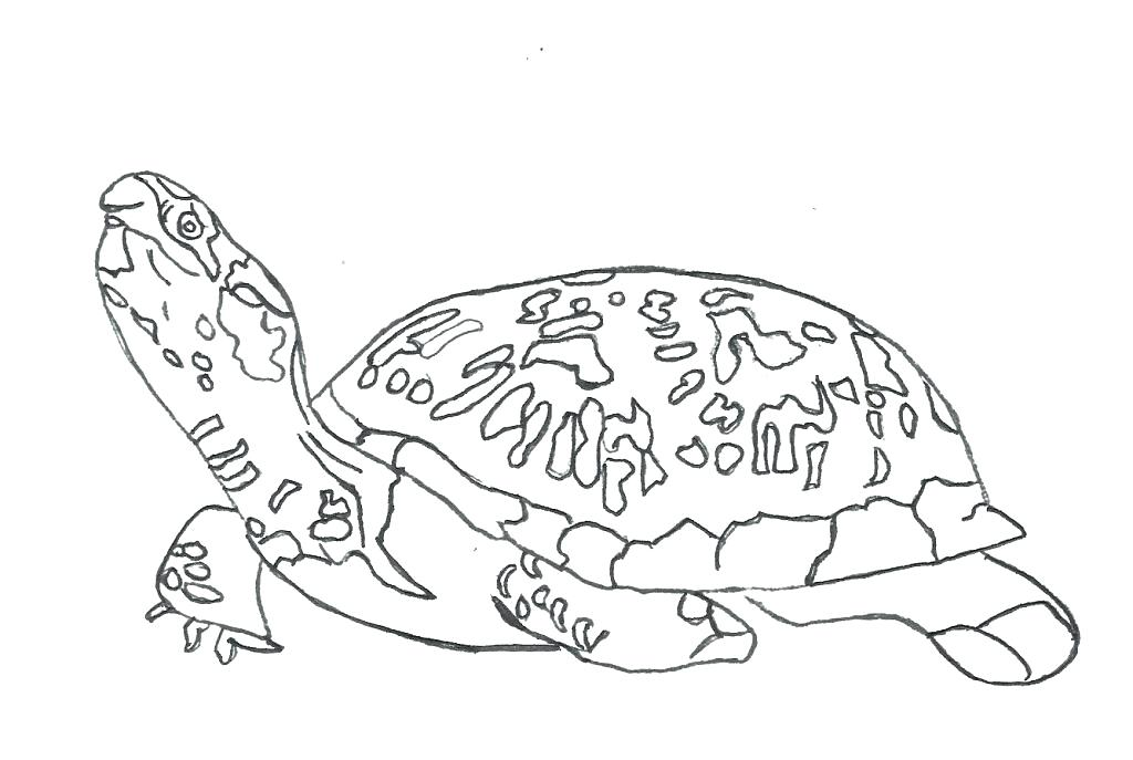 1024x687 Sea Turtle Coloring Page Turtle Coloring Pages To Print Baby Sea