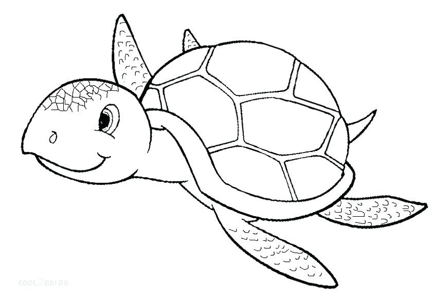 850x594 Sea Turtle Pictures To Color