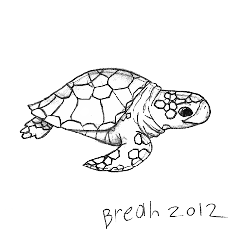 480x480 Sea Turtle Sketch Art By Breah