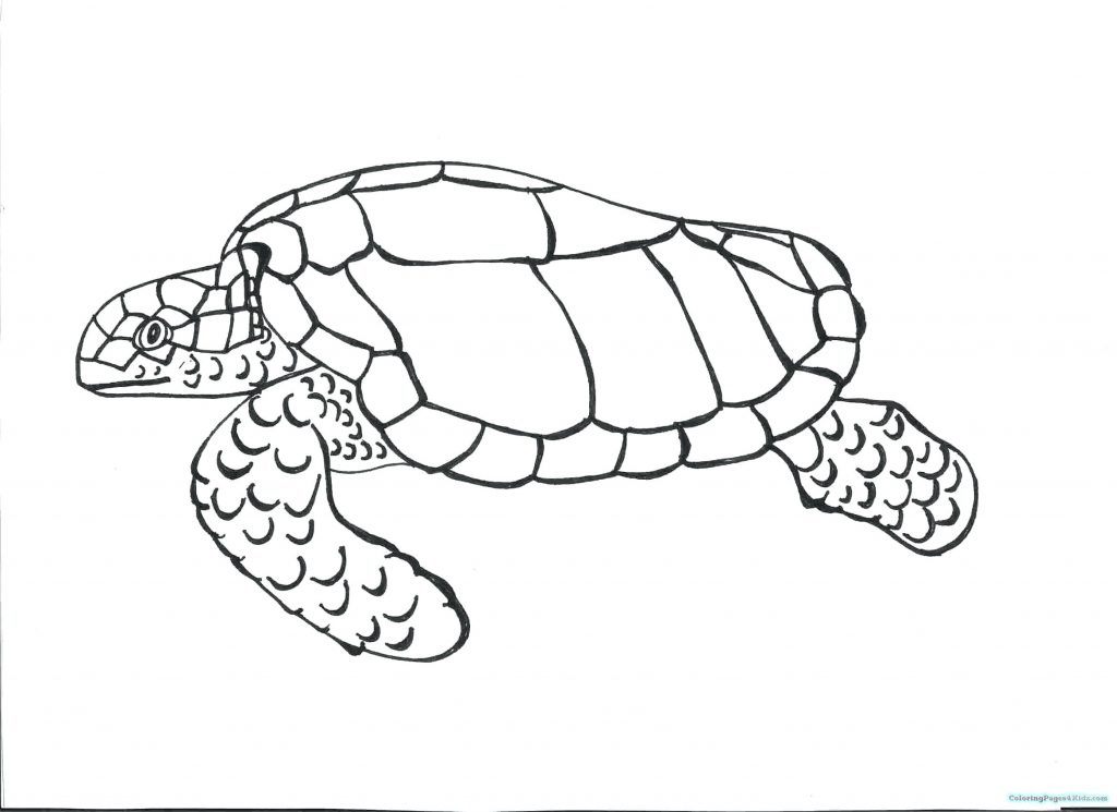 1024x745 Coloring Pages ~ Sea Turtle Coloring Page Super Pages Printable