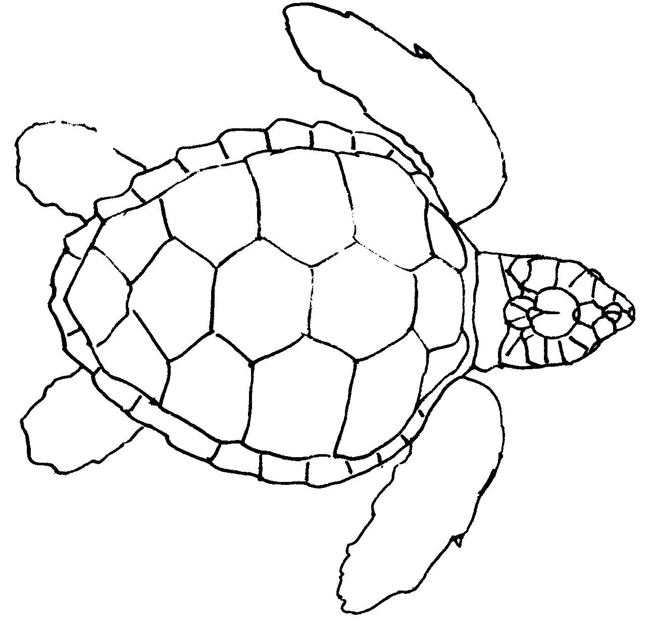 1295x1261 Page 44 Monster Truck Coloring Pages. Sea Turtle
