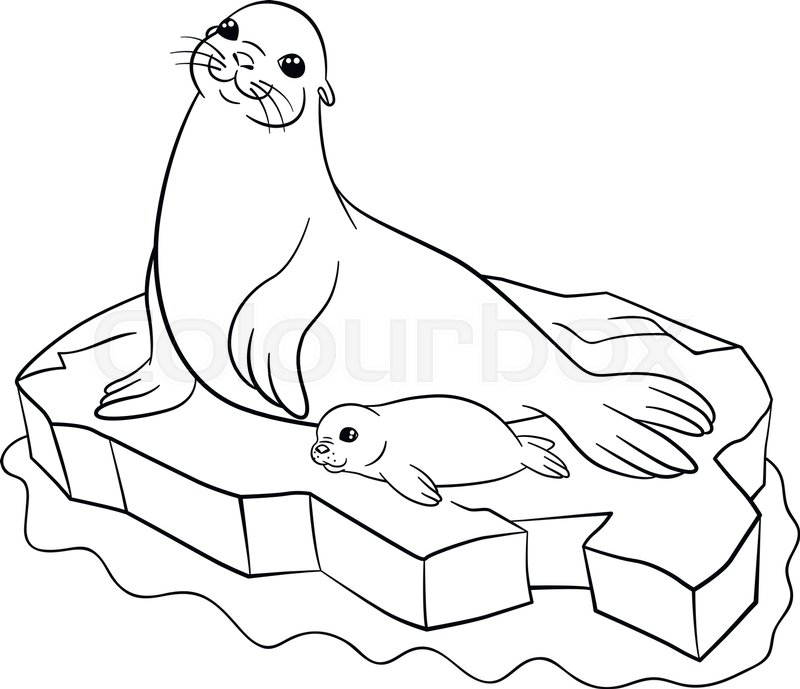 800x689 Coloring Pages. Mother Seal With Her Little Cute Baby On The Ice