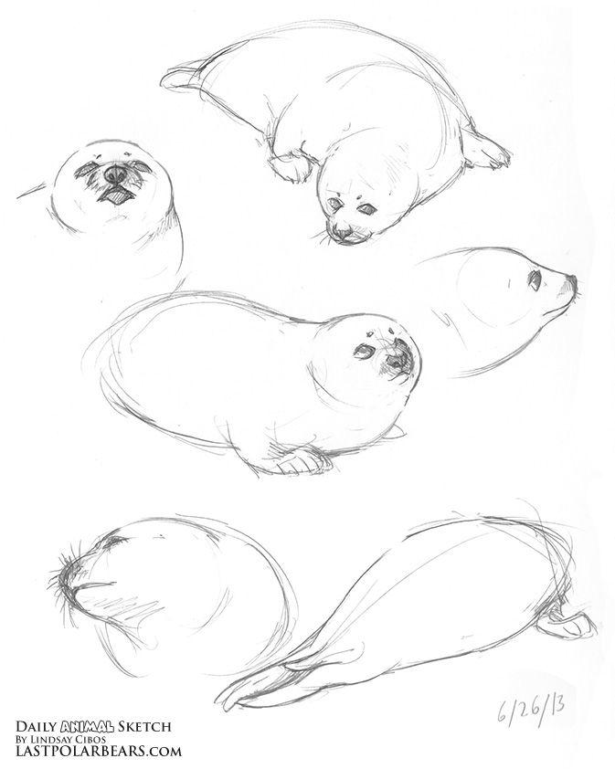 673x842 Daily Animal Sketch Arctic Bundle Last Of The Polar Bears