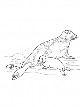 262x350 Gray Seal Mother And Baby Coloring Page Super Coloring Zodius