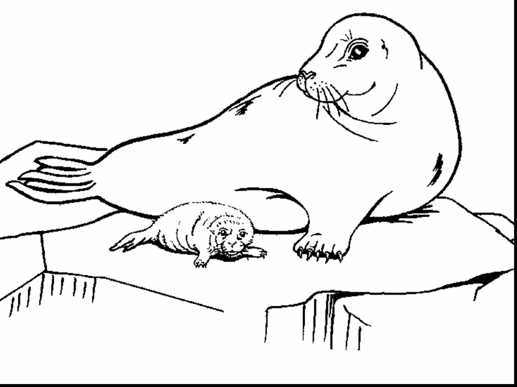 1760x1320 Unbelievable Baby Seal Coloring Pages With Seal Coloring Pages