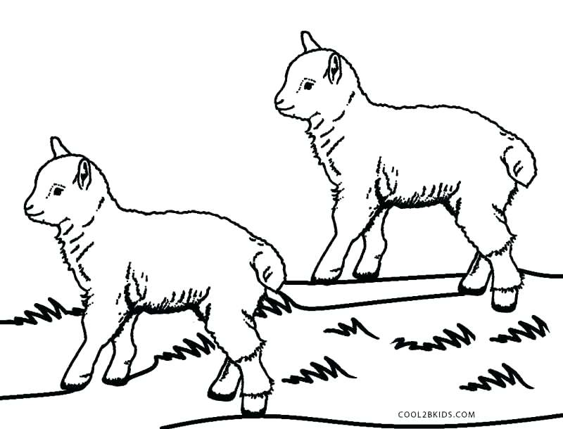 800x610 Coloring Page Of Sheep