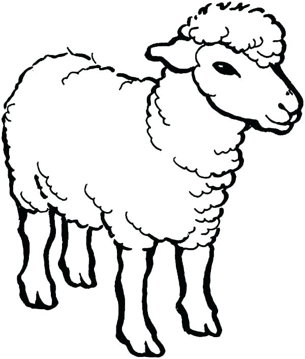 600x706 Coloring Page Sheep
