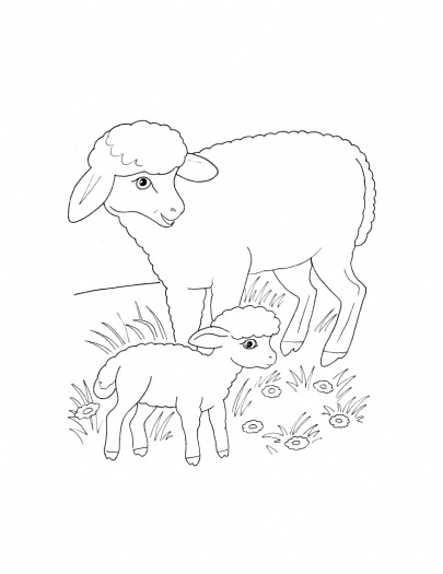405x525 Free Coloring Pages Of Baby Birds In Nest Sheep Mother And Lamb