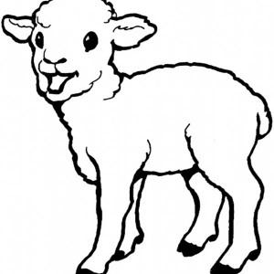 300x300 Baby Sheep Drawing