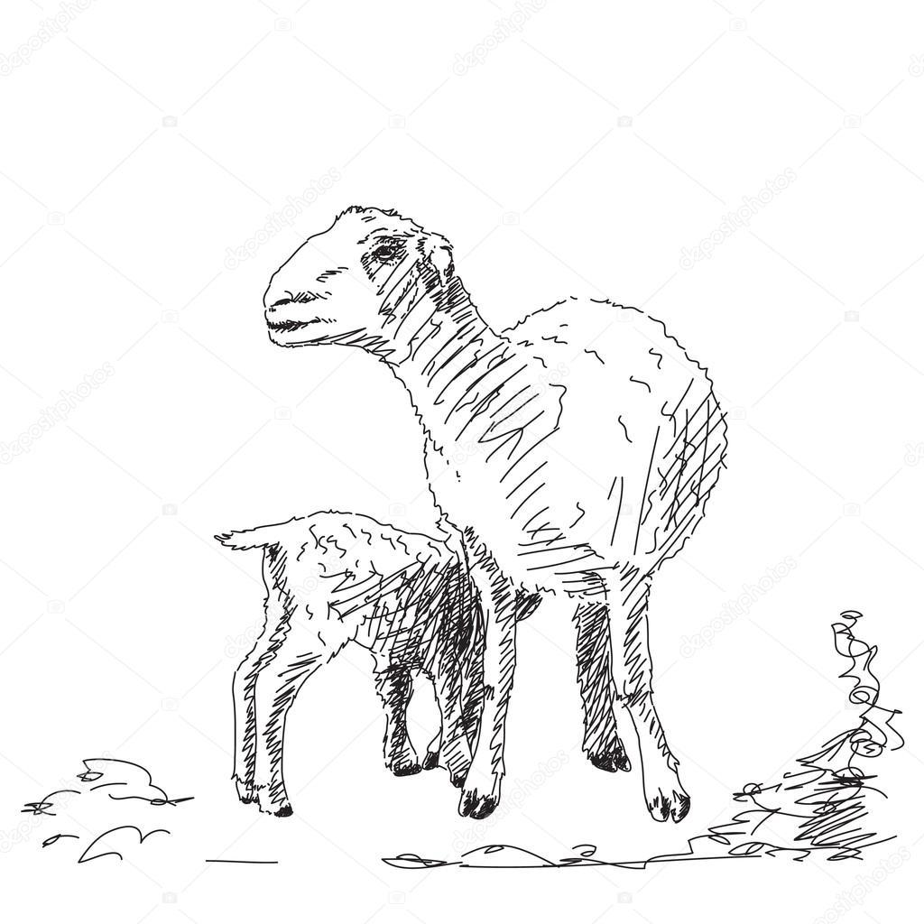 1024x1024 Baby Lamb Stock Vector Olgatropinina