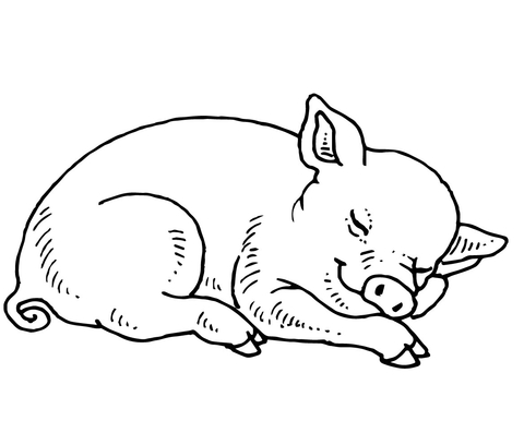 480x408 Sleeping Baby Pig Coloring Page Free Printable Coloring Pages