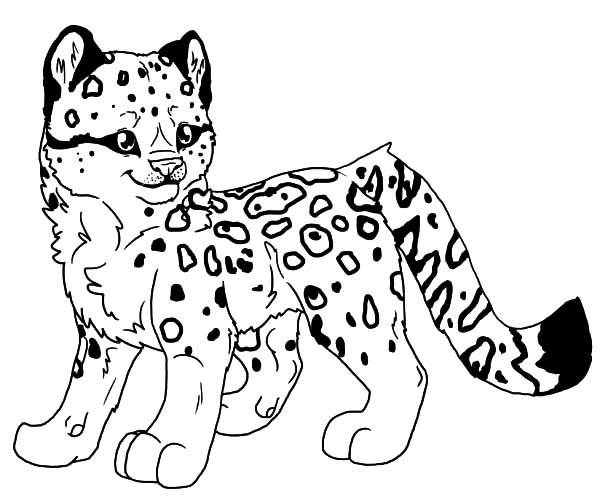 600x503 Free Coloring Pages Snow Leopard Coloring Page For Kids