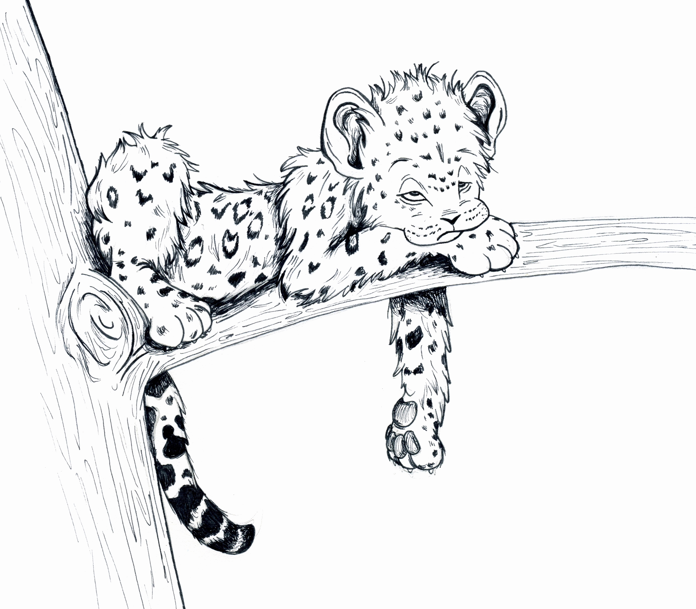 baby snow leopard drawing at free for personal use baby snow leopard drawing. Black Bedroom Furniture Sets. Home Design Ideas
