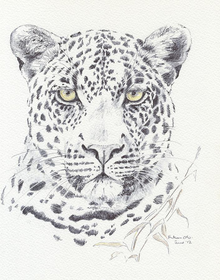 706x900 Leopard Drawing By Gail Otto