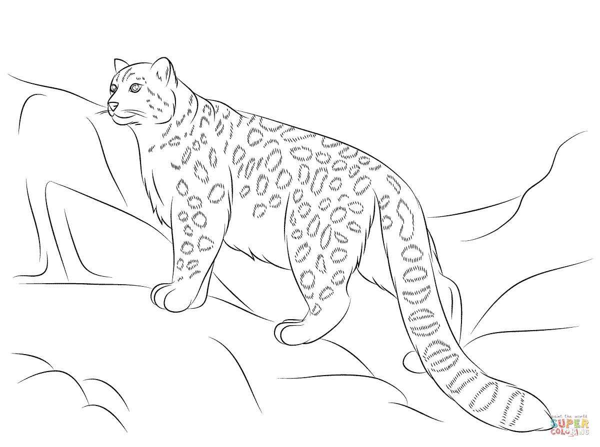 1200x895 Snow Leopard Coloring Page Free Printable Coloring Pages