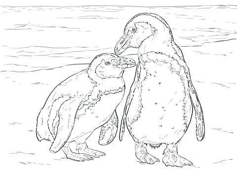 480x360 Baby Penguin Coloring Pages Baby Snow Leopard Coloring Penguin