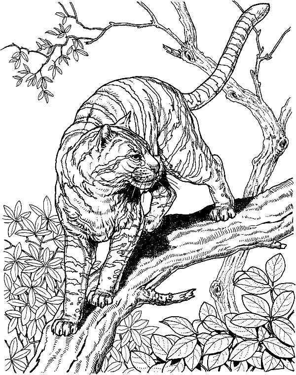 600x759 Baby Snow Leopard Coloring Pages Batch Coloring