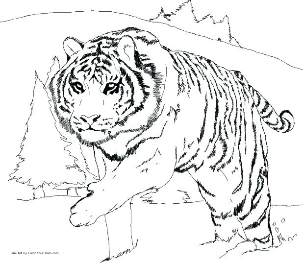 618x537 Cute Tiger Coloring Pages Super Cute Animal Tiger Coloring Pages