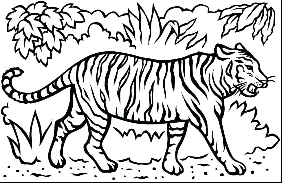 974x634 Baby Tiger Coloring Pages Coloring Coloring Sheets Spectacular