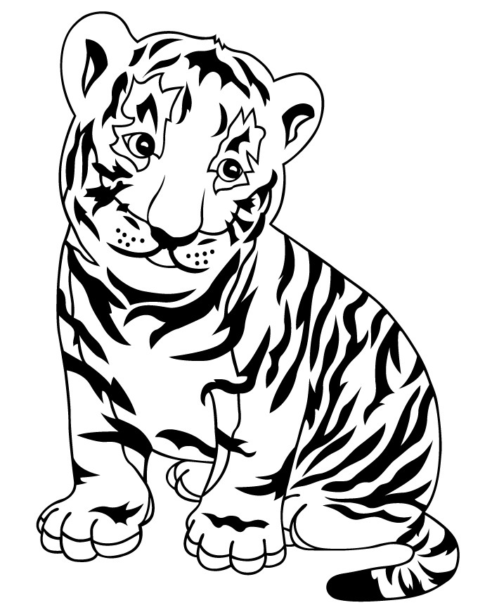 Baby White Tiger Drawing