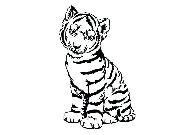 Baby white tiger drawing at free for for White tiger coloring pages