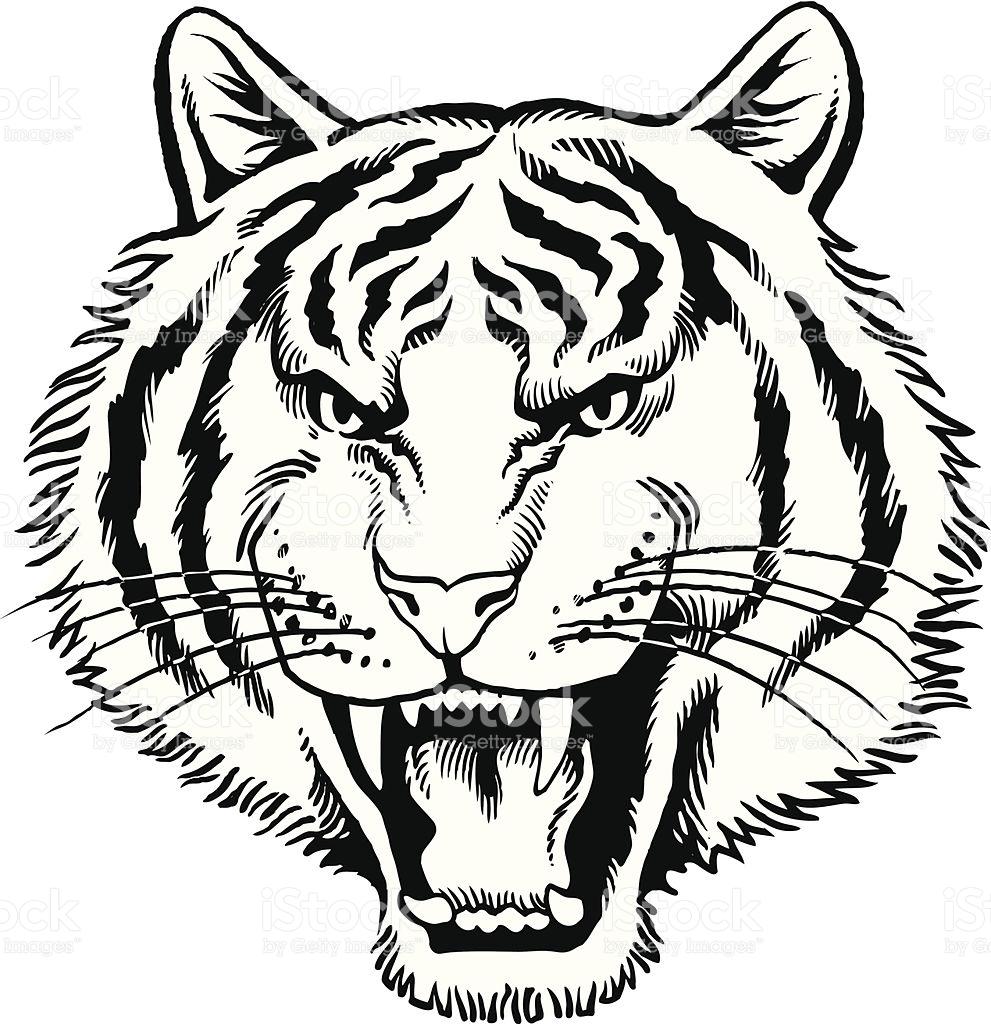 991x1024 Drawn White Tiger Roar