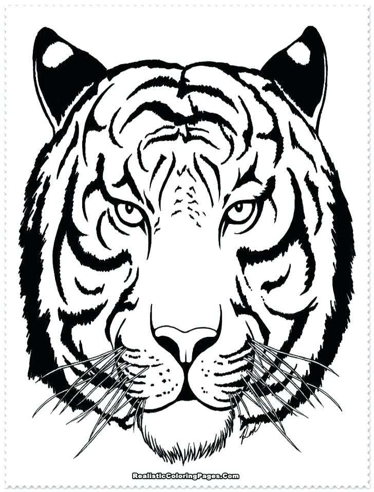 728x958 Tiger Coloring Pages White