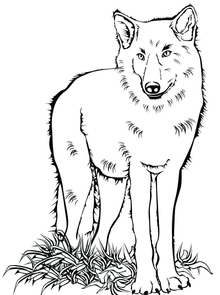 750x1002 Coloring Pages Of Wolfs Coloring Pages Animals Wolf 6 Coloring
