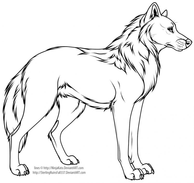 805x758 Drawing How To Draw A Cartoon Wolf Cub Together With How To Draw