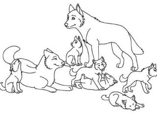 320x240 Fresh Baby Wolf Coloring Pages 91 For Your Free Colouring Pages