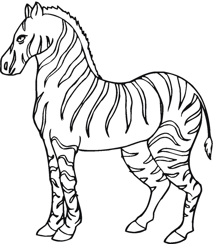 Baby Zebra Drawing