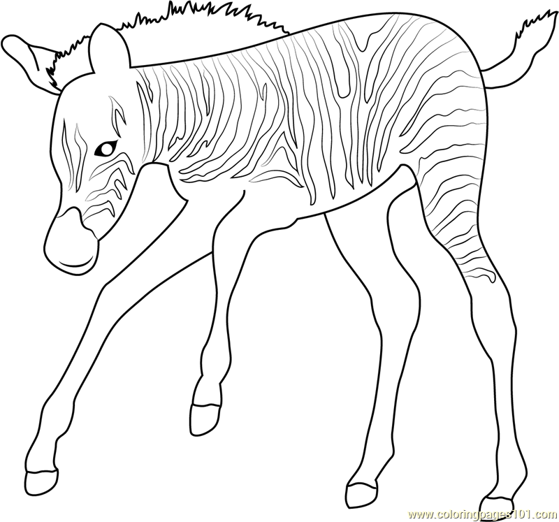 800x747 Baby Zebra Up Coloring Page