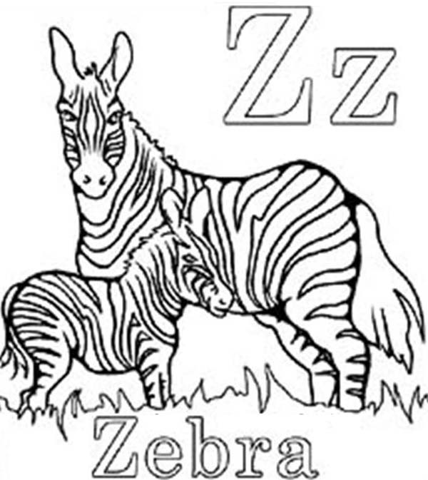 600x673 Cute Baby Zebra Coloring Page
