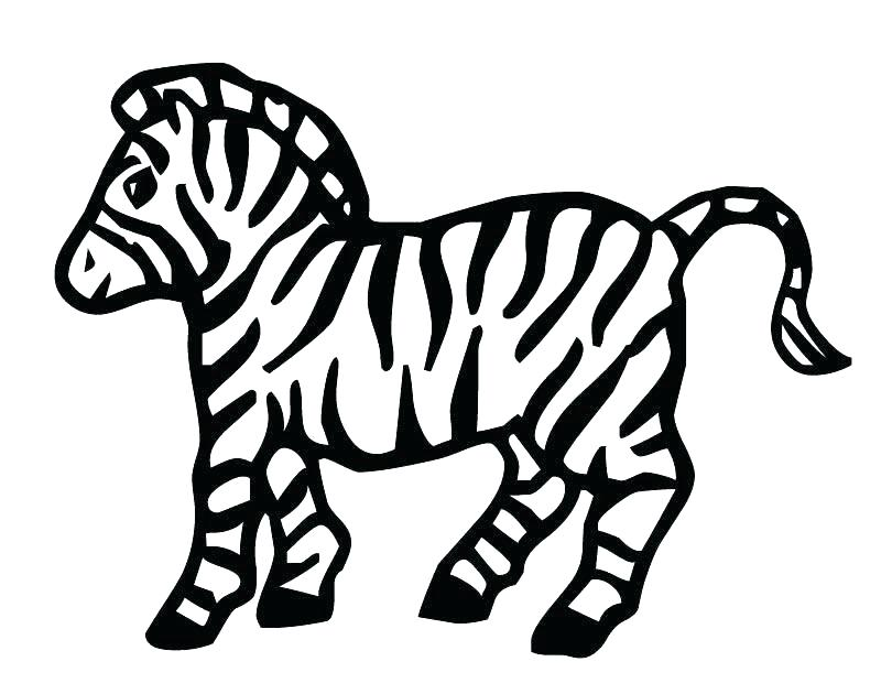 810x630 Coloring Pages Zebra Synthesis.site