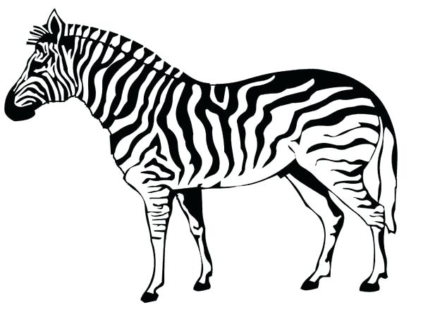 600x453 Great Marvellous Baby Zebra Coloring Pages Crayola Photo Full Size