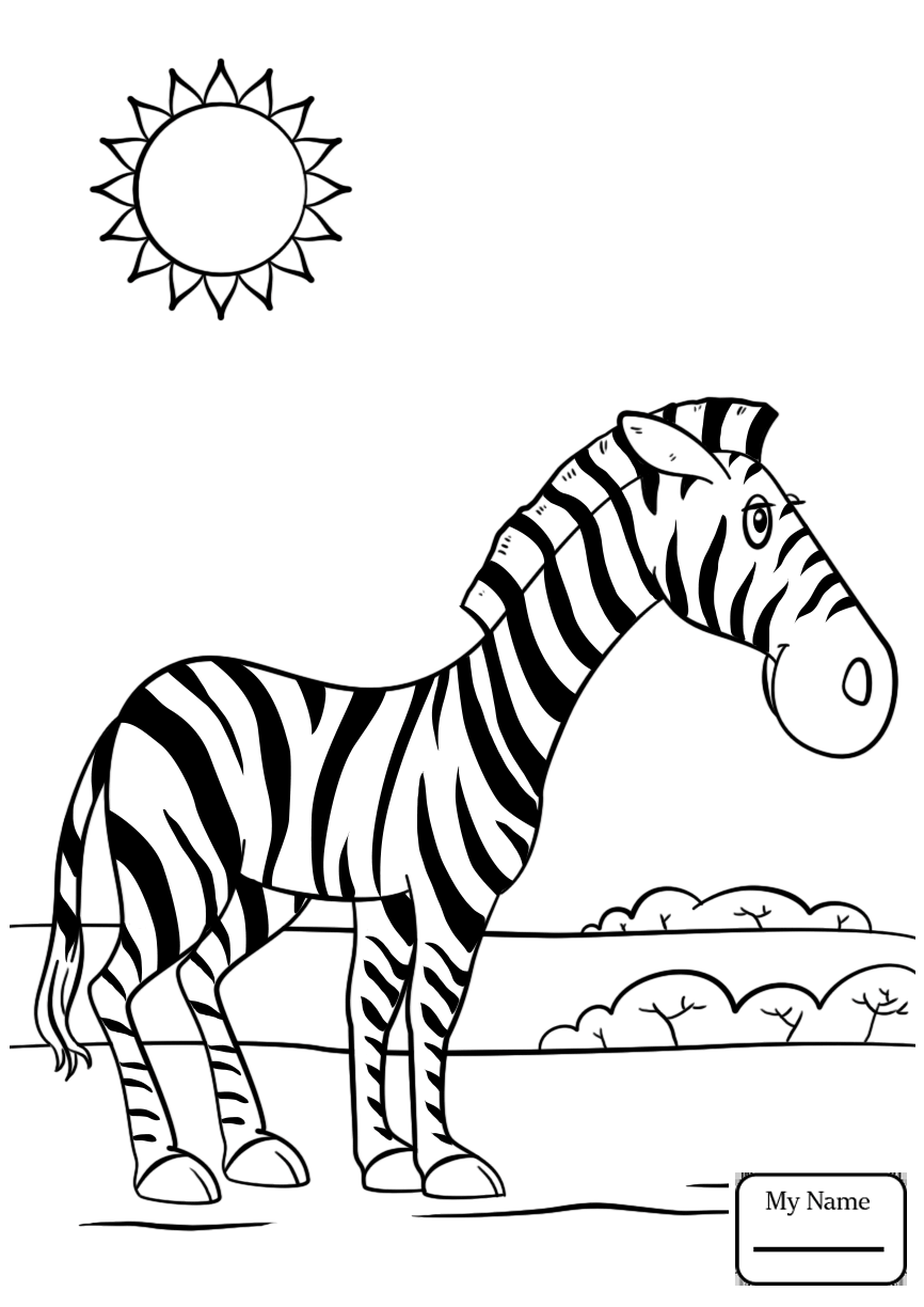 866x1224 Mammals Cute Baby Zebra Zebras Coloring Pages For Kids