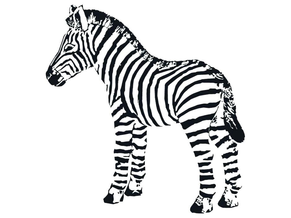 940x705 Baby Zebra Coloring Pages Baby Zebra Coloring Pictures Cartoon