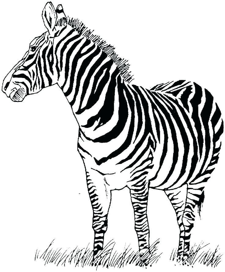 736x889 Baby Zebra Coloring Pages Coloring Pages Baby Cute Zebra Coloring