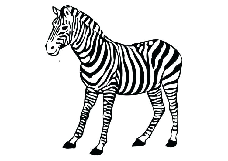 750x531 Baby Zebra Coloring Pages Funny Little Page Cute